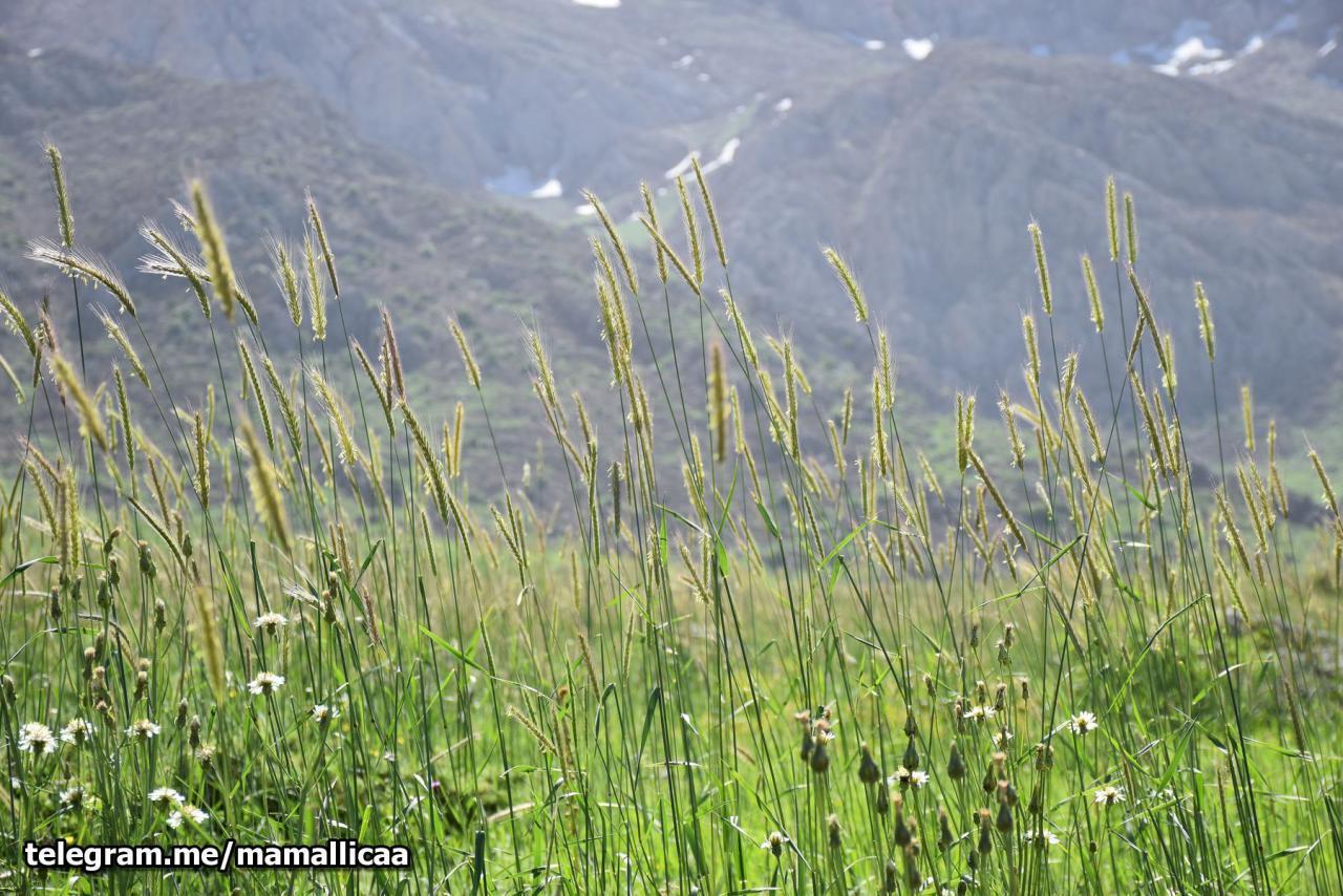 طبیعت زیبای کردستان