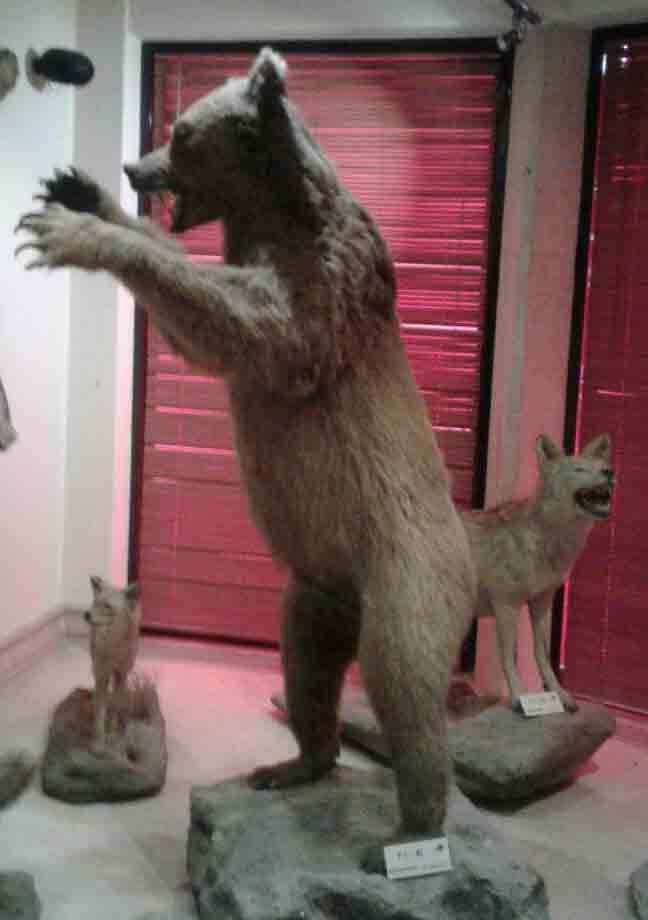 خرس ایرانی کوچیکه ولی خیلی قویه, مراقب باشین!:)