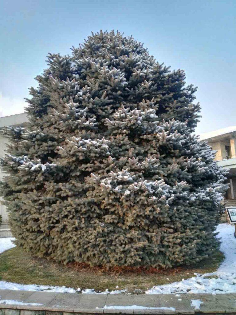 این درخت سرو زیبا دم ورودی بود😍 راستی اینجا قبلا یکی از کاخ های شمس پهلوی بوده:)