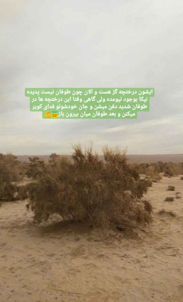 اگه طوفان شه این درختچه ها از کویر محافظت میکنن و نمیزارن گسترش پیدا کنه
